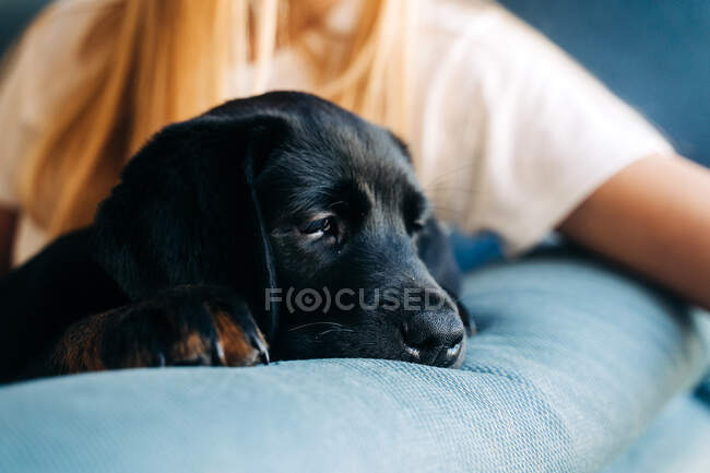Woman with dog on couch — Stock Photo