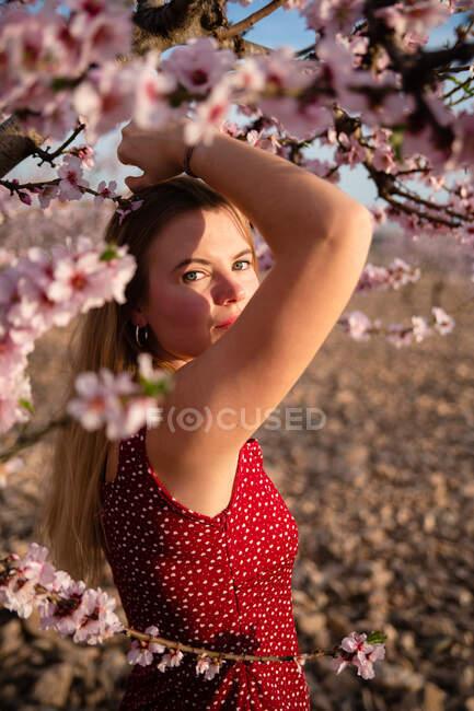 Mujer rubia con el pelo largo posando bajo un almendro floreciente y mirando a la cámara - foto de stock