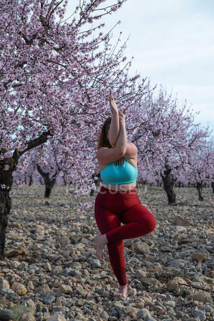 Mujer curvilínea irreconocible en ropa deportiva de pie en Garudasana en el jardín con almendros en flor y la práctica de yoga mientras se equilibra en la pierna - foto de stock