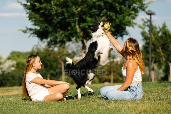 Улітку на лузі сидять жінка та дівчинка - підліток і бавляться з пухнастим прикордонником Коллі Собакою в сонячний день на вихідних. — стокове фото