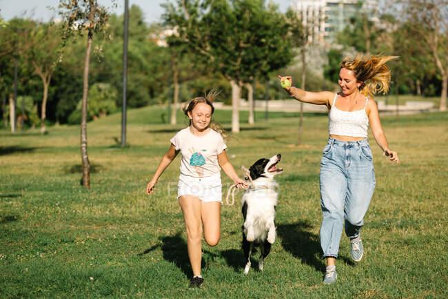 Весела мати і дочка біжать в літній парк і бавляться з чарівним Прикордонним Коллі собакою, розважаючись разом на вихідних — стокове фото