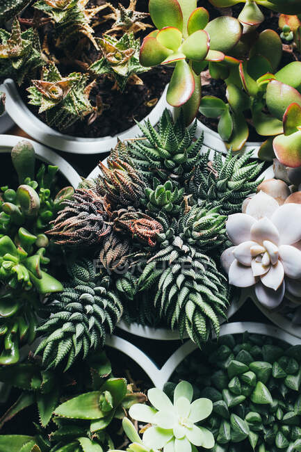 Top view of various types of succulent plants placed in pots on wooden table in light place — Stock Photo