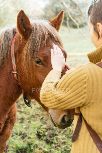 Side view of tender female stroking muzzle of chestnut horse grazing in meadow while spending weekend in countryside — Stock Photo
