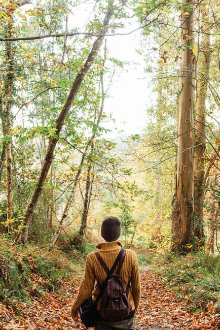 Вид сзади анонима с рюкзаком, идущего по тропинке в очках осенью — стоковое фото