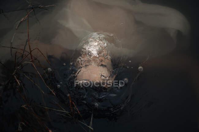 Вигляд на невідому жінку - туристку, що плаває з хвилястою тканиною в озері в сутінках. — стокове фото
