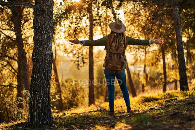 Вид сзади стройный женский турист в повседневной одежде с рюкзаком, стоящим с распростертыми объятиями в волнении в зеленом обильном лесу и любующимся прекрасным закатом — стоковое фото