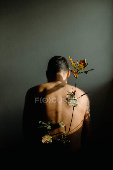 Back view anonymous shirtless male sitting in dark room near tender thin plant twig with withering leaves — Stock Photo