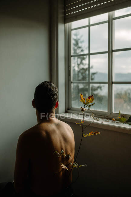 Back view anonymous shirtless male sitting in dark room near tender thin plant twig with withering leaves and looking out window — Stock Photo