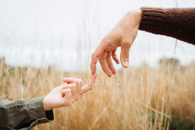 Crop anonymous boyfriend touching finger of female beloved on meadow with golden grass under white sky — Photo de stock