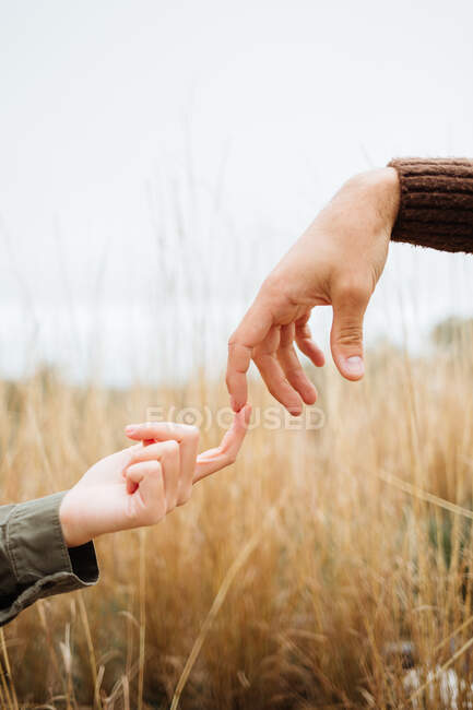 Crop anonymous boyfriend touching finger of female beloved on meadow with golden grass under white sky — Stock Photo