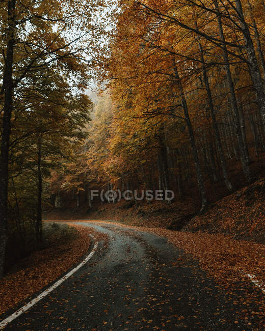 Ground level of wet asphalt road with fallen leaves going through woods on overcast day in autumn — Stock Photo