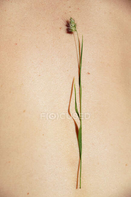 From above of tender bright green flower on body of crop anonymous tanned person in sunlight — Stock Photo