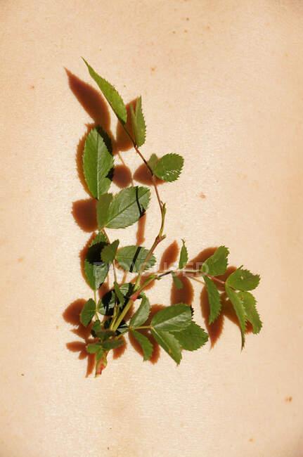 Сверху хрупкое зеленое тонкое растение на теле урожая неузнаваемое лицо в солнечный день — стоковое фото