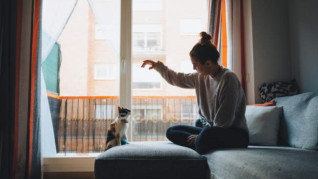 Вид сбоку барышни в повседневной одежде, сидящей на удобном диване со скрещенными ногами и играющей с восхитительной калико-кошкой в современной квартире — стоковое фото