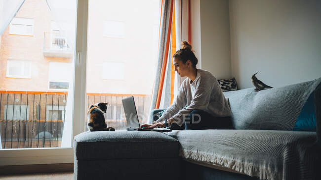 Full body of young female freelancer in casual clothes sitting on comfortable couch and working remotely on laptop near cute calico cat — Stock Photo