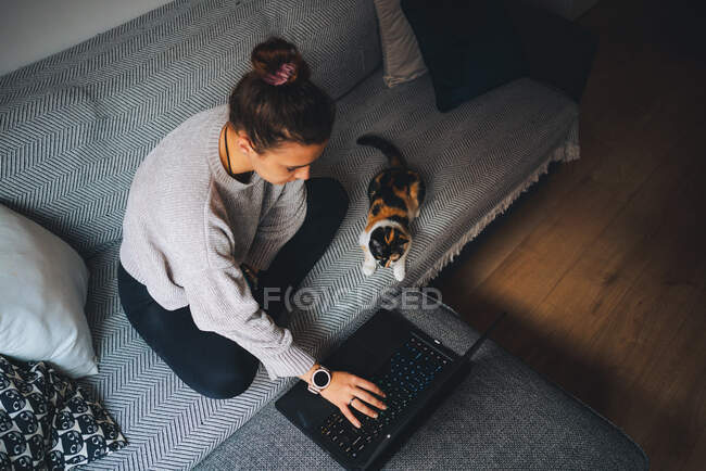 From above full body of young female freelancer in casual clothes sitting on comfortable couch and working remotely on laptop near cute calico cat — Stock Photo