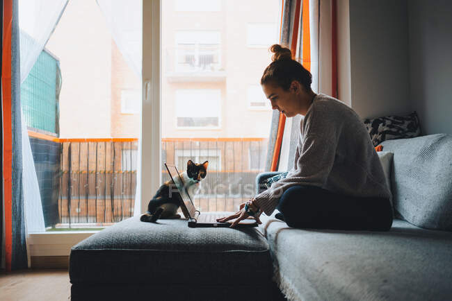 Crop of young female freelancer in casual clothes sitting on comfortable couch and working remotely on laptop near cute calico cat — Stock Photo