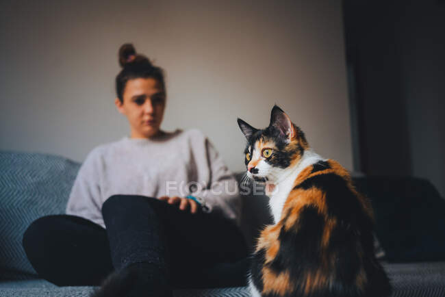 Adorable calico cat in modern apartment and side view of young lady in casual clothes sitting on comfortable couch with crossed legs — Stock Photo