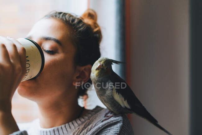 Cute cockatiel bird sitting on shoulder of young thoughtful female owner in warm sweater standing near window and drinking mug of hot beverage at home — Stock Photo