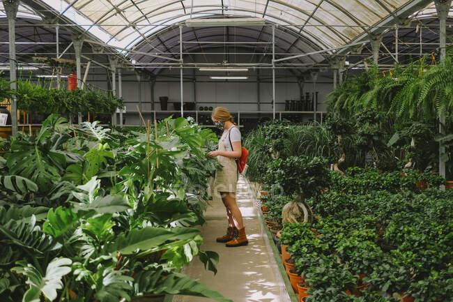Fiorista professionista femminile in maschera protettiva esaminando piante verdi mentre lavora in serra durante la pandemia di coronavirus — Foto stock