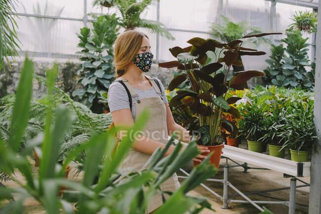 Giovane giardiniere donna in grembiule e maschera protettiva che porta vaso con pianta verde mentre lavora in aranciera durante la pandemia di coronavirus — Foto stock
