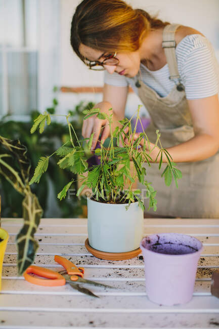 Young female florist in apron planting green plant into ceramic pot while working in professional floristry studio — Stock Photo