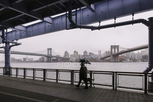 Back view anonymous male with umbrella strolling with dog on paved promenade in New York City on cloudy rainy day — Stock Photo