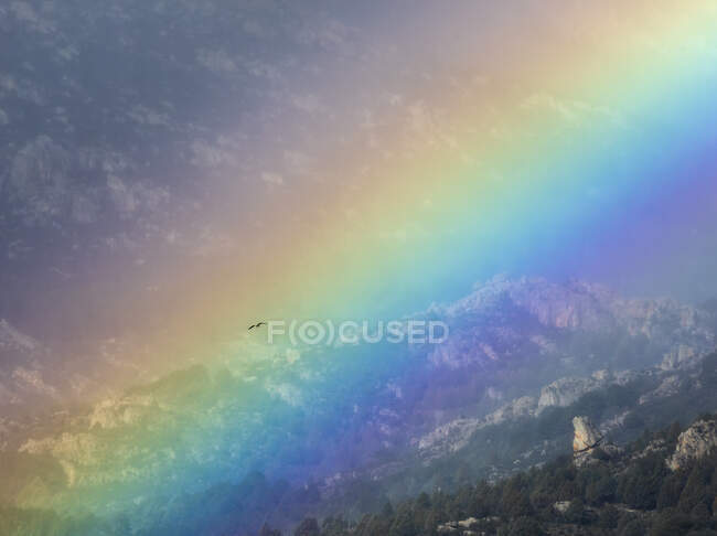 Bird flying through vivid rainbow on cloudy sky over mountain ridge — Stock Photo