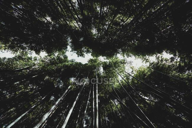 Из-под кадра величественных высоких деревьев, растущих в удивительном лесу в Токио — стоковое фото