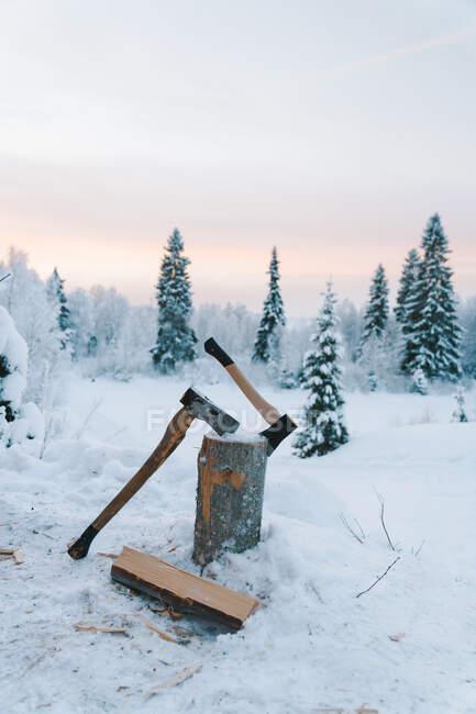 Axes pointus poussés en rondins placés sur un sol enneigé près de sapins contre un ciel nuageux au coucher du soleil en hiver — Photo de stock