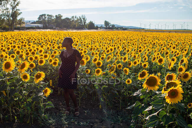 African American female in dress standing on background of blossoming sunflowers in field and enjoying summer in countryside — Stock Photo