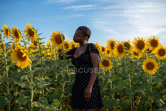 Side view of tranquil African American female delicately touching blooming sunflower while enjoying nature in field in summer — Stock Photo