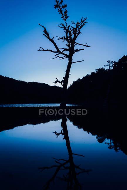 Vista panorámica de la silueta ondulada del árbol reflejándose en el lago puro contra monturas bajo el cielo azul en el crepúsculo - foto de stock