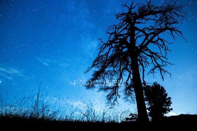 Desde abajo vista panorámica del árbol cubierto con ramas onduladas bajo el cielo azul en el crepúsculo - foto de stock