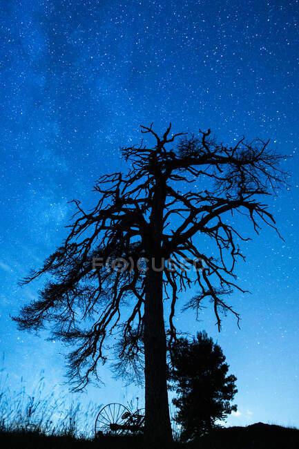 D'en bas vue de paysage d'arbre envahi avec des branches ondulées sous le ciel bleu au crépuscule — Photo de stock