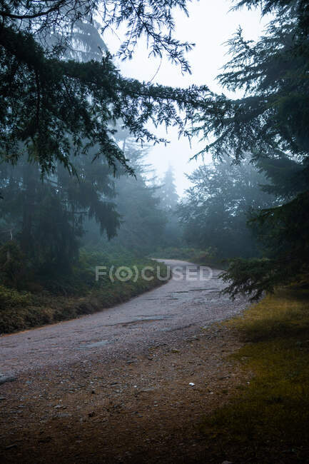Narrow empty pathway between lush coniferous trees growing in woods under white sky in daylight — Stock Photo