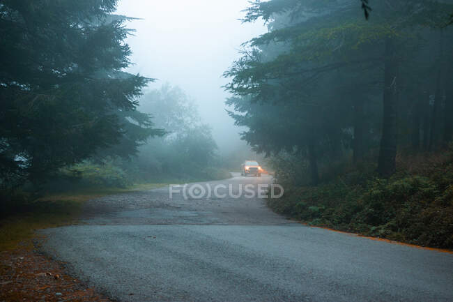Transport with headlights on driving on roadway between lush firs in woods on foggy day — Stock Photo