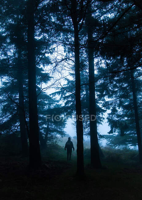 Anonymous tourist admiring overgrown lush trees in woods while standing on pathway in twilight — Stock Photo
