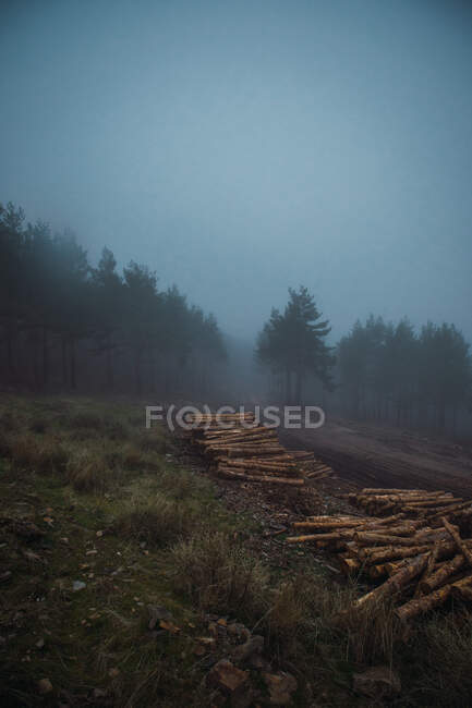 Scenic view of heap of timber on grass against trees under misty sky in twilight — Stock Photo