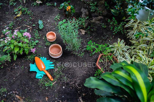 Dall'alto pentas lanceolata fiore in vaso di ceramica collocato in serra vicino alla pianta di Pilea e Kalanchoe fioritura a terra — Foto stock