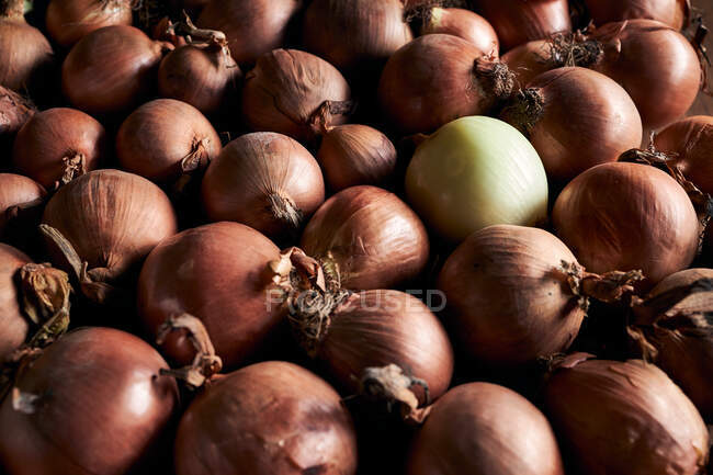 From above of many fresh whole onions with dry peel arranged in pile — Stock Photo