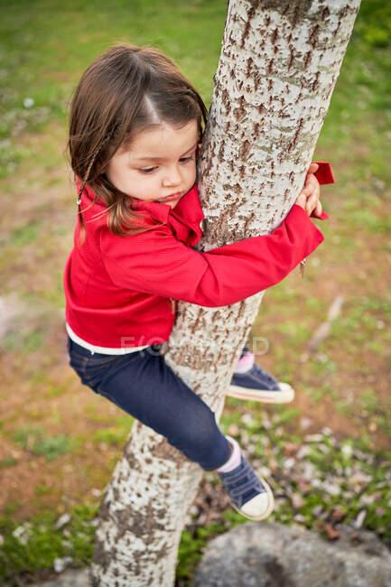 De cima vista lateral do menino bonito pendurado no tronco da árvore no parque — Fotografia de Stock