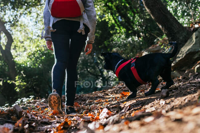 Back view of crop anonymous female backpacker with cute little dog walking on trail in green forest in sunny day — Stock Photo
