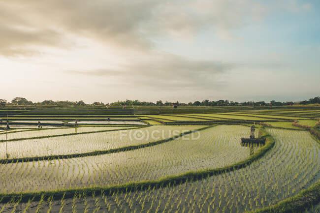 Spectacular views of Rice Field Kajsa — Stock Photo