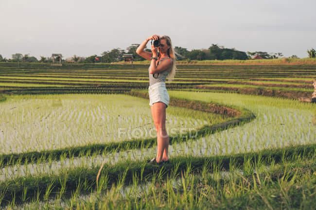 Блондинка фотографирует на рисовом поле в Кайсе — стоковое фото