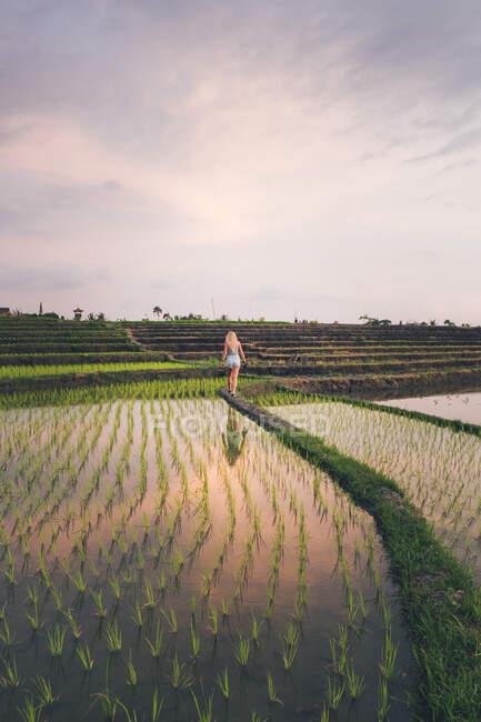 Blond woman standing in a rice field in Kajsa — Stock Photo