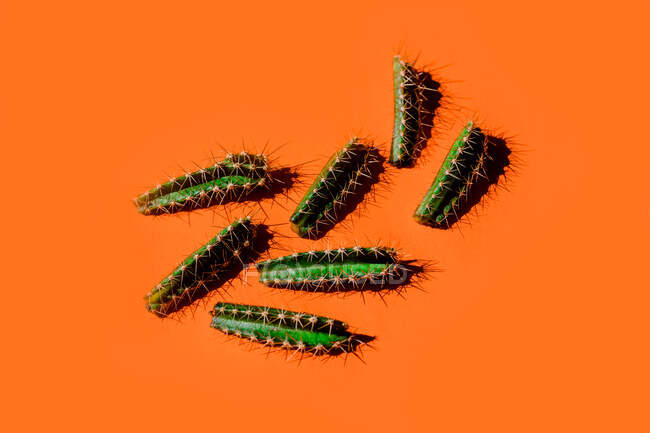 Top view minimalistic composition of green spiky cactus branches scattered on bright orange background — Stock Photo