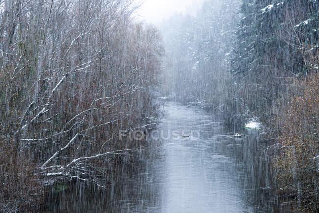 Снег в зимнем пейзаже реки — стоковое фото