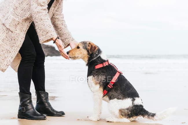 Побочный вид неузнаваемой женщины с поднятым пальцем обучающей послушной чистокровной собаке на песчаном побережье океана против гор — стоковое фото