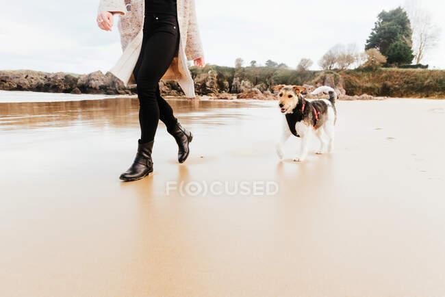 Неузнаваемая самка, прогуливающаяся с чистокровной собакой на песчаном побережье океана против гор — стоковое фото